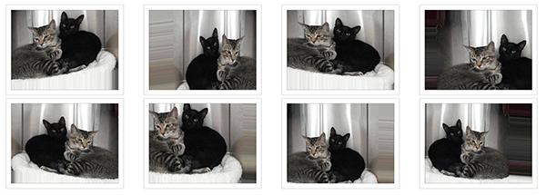 аугментация котиков